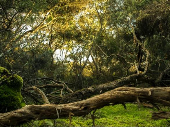 jungle trees representing the urban ecosystem